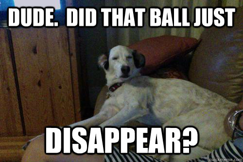 Dude.  Did that ball just disappear? - Dude.  Did that ball just disappear?  10 Dog