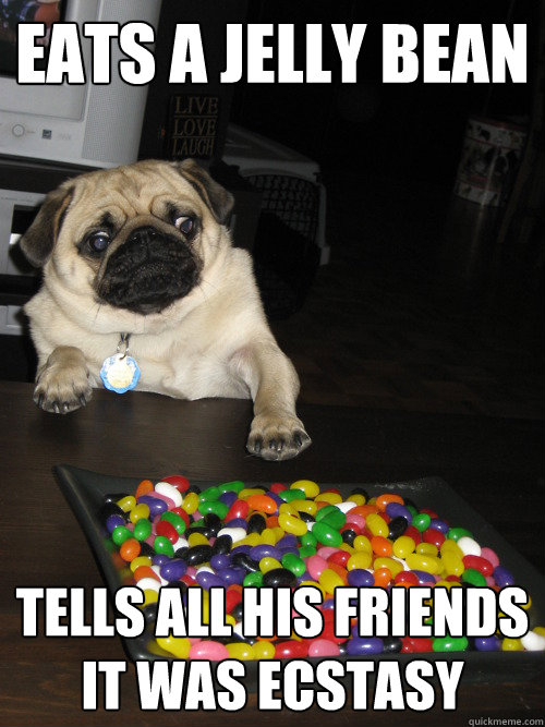 Eats a jelly bean tells all his friends it was ecstasy - Eats a jelly bean tells all his friends it was ecstasy  Pill Poppin Pug