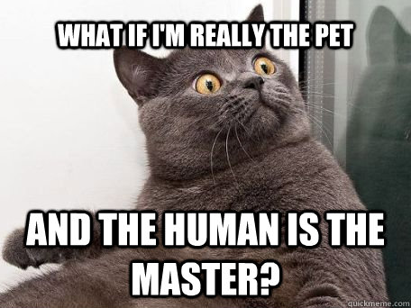What if i'm really the pet and the human is the master? - What if i'm really the pet and the human is the master?  conspiracy cat