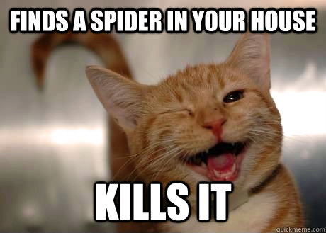 Finds a spider in your house kills it - Finds a spider in your house kills it  GoodGuyCat