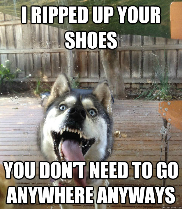 i ripped up your shoes you don't need to go anywhere anyways - i ripped up your shoes you don't need to go anywhere anyways  Overly Attached Dog