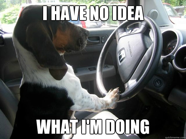 i have no idea what i'm doing - i have no idea what i'm doing  Driving Dog