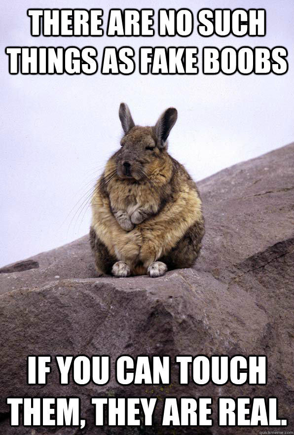 There are no such things as fake boobs If you can touch them, they are real.  Wise Wondering Viscacha