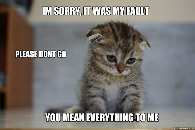 Im sorry, It was my Fault Please dont go You mean everything to me  Sad Kitten