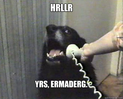 HRllr Yrs, ermaderg.  yes this is dog