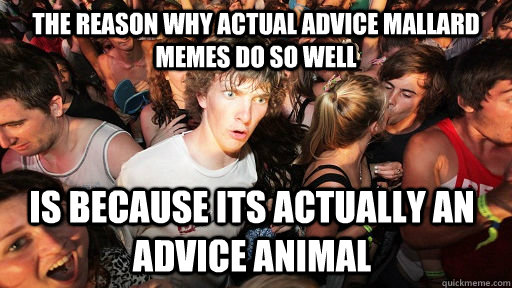 the reason why actual advice mallard memes do so well is because its actually an advice animal  - the reason why actual advice mallard memes do so well is because its actually an advice animal   Sudden Clarity Clarence