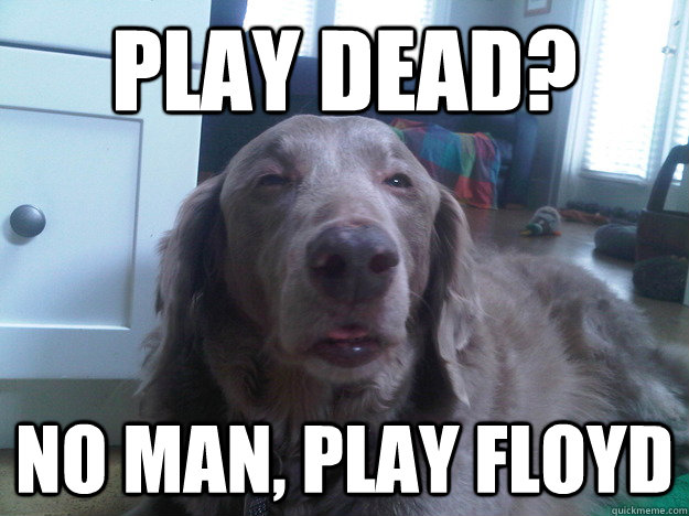 Play Dead? No man, play floyd  10 Dog