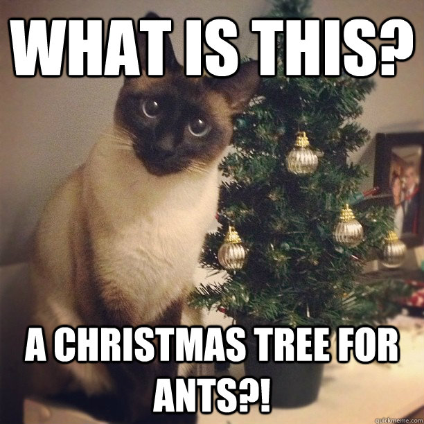 What is this? A christmas tree for ants?! - What is this? A christmas tree for ants?!  Misc