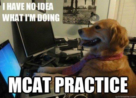 MCAT Practice -  MCAT Practice  I have no idea what Im doing dog