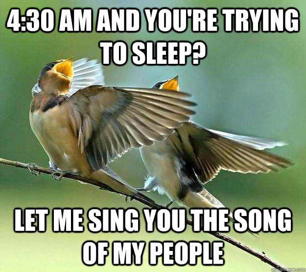 4:30 am and you're trying to sleep? Let me sing you the song of my people