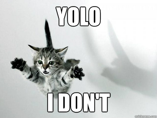 yolo I don't - yolo I don't  Falling Cat
