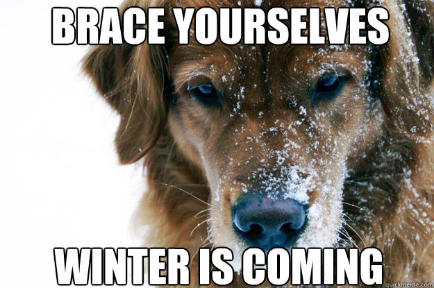 brace yourselves Winter is coming - brace yourselves Winter is coming  direwolf
