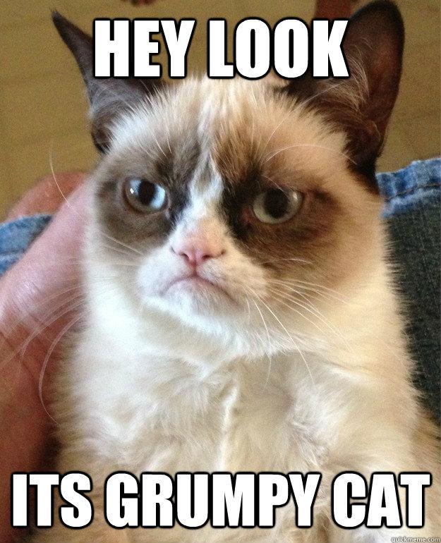 Hey Look its grumpy cat - Hey Look its grumpy cat  Misc