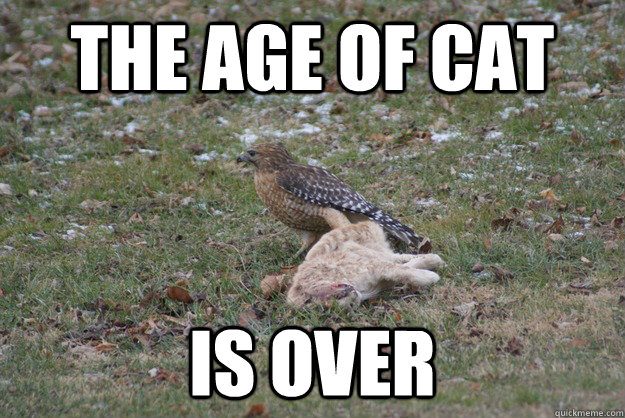 The age of cat is over - The age of cat is over  Misc