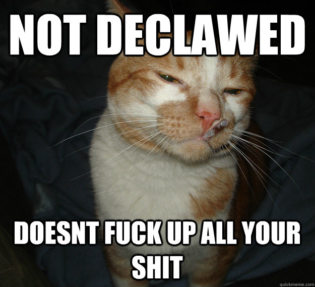 not declawed doesnt fuck up all your shit