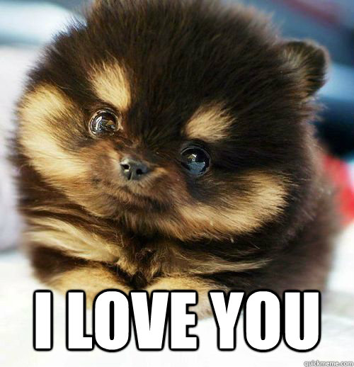 Funny Memes About I Love You : I love you puppy meme memes quickmeme