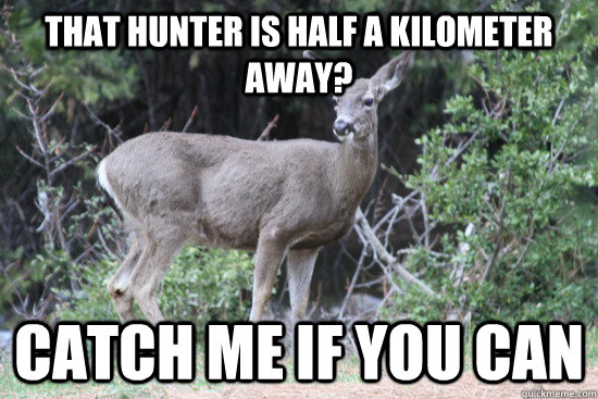 That hunter is half a kilometer away? Catch Me if you can  Daredevil Deer