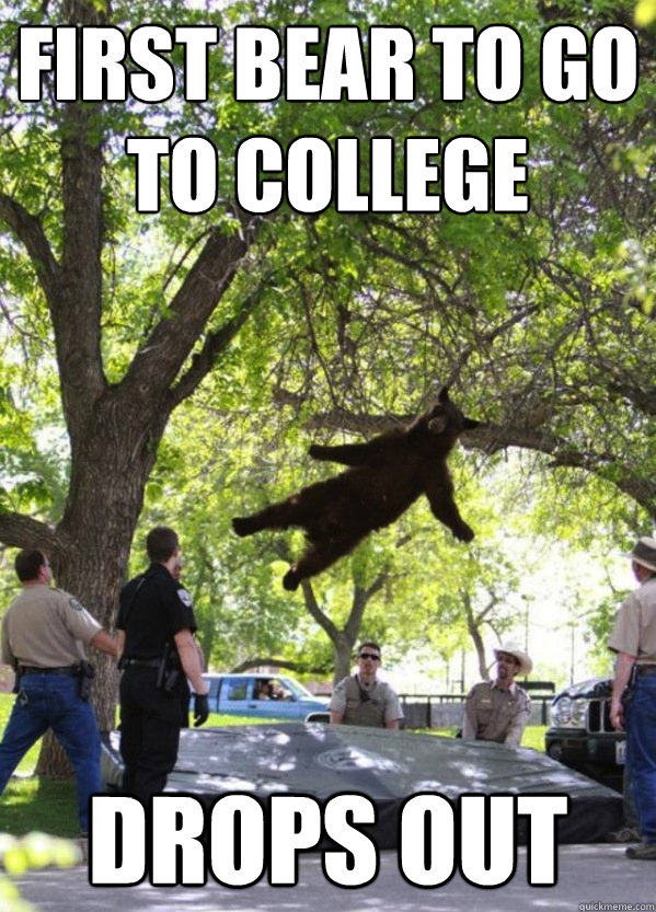 First Bear to go to college Drops out