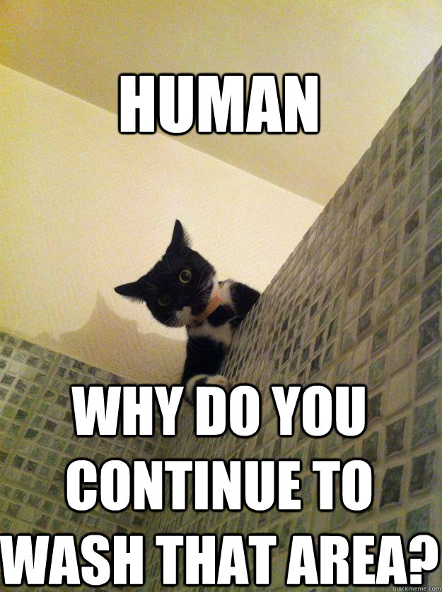 Human Why do you continue to wash that area? - Human Why do you continue to wash that area?  Incredulous Cat