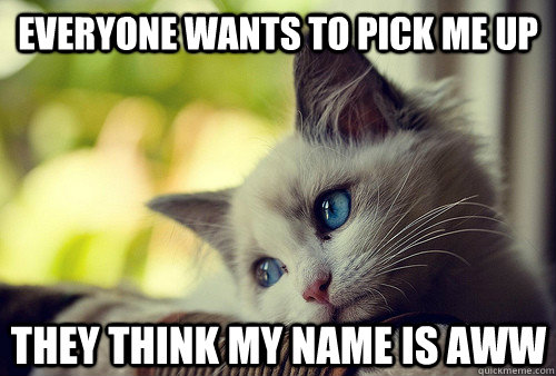 Everyone wants to pick me up they think my name is Aww - Everyone wants to pick me up they think my name is Aww  First World Cat Problems