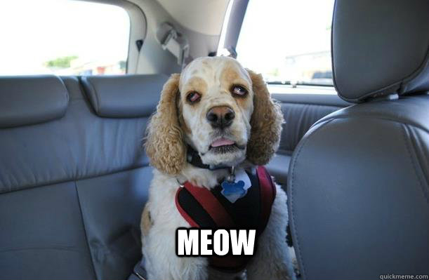 Meow - Meow  10 Dog