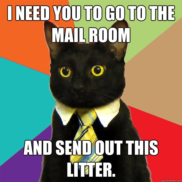 I NEED YOU TO GO TO THE MAIL ROOM And send out this litter. - I NEED YOU TO GO TO THE MAIL ROOM And send out this litter.  Business Cat