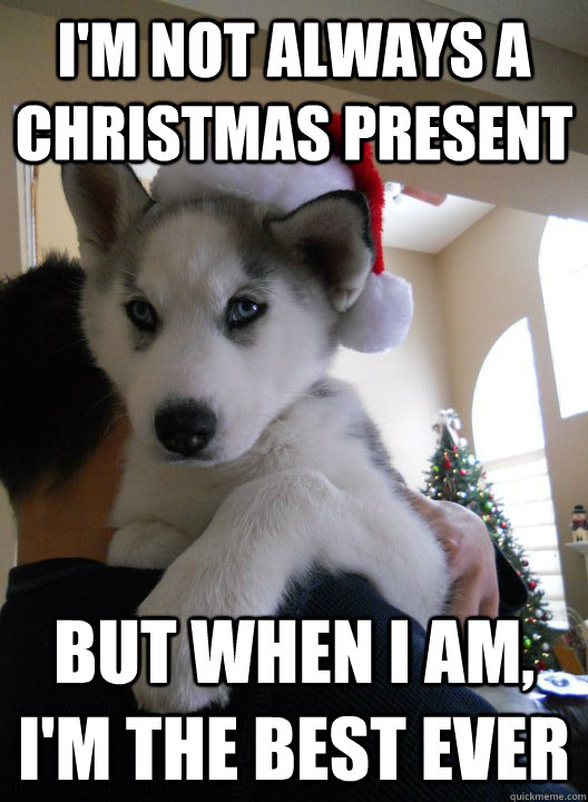Most Interesting Husky Christmas Present Memes Quickmeme