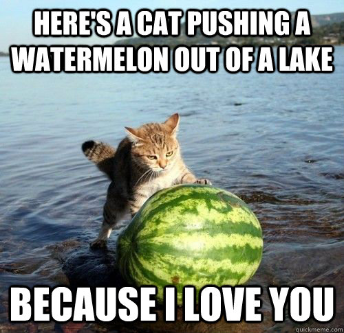 Here's a cat pushing a watermelon out of a lake because i love you