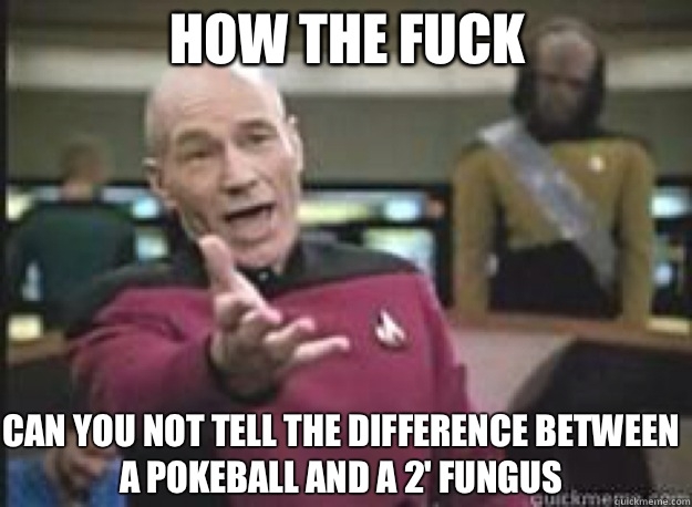 How the fuck  can you not tell the difference between a pokeball and a 2' fungus