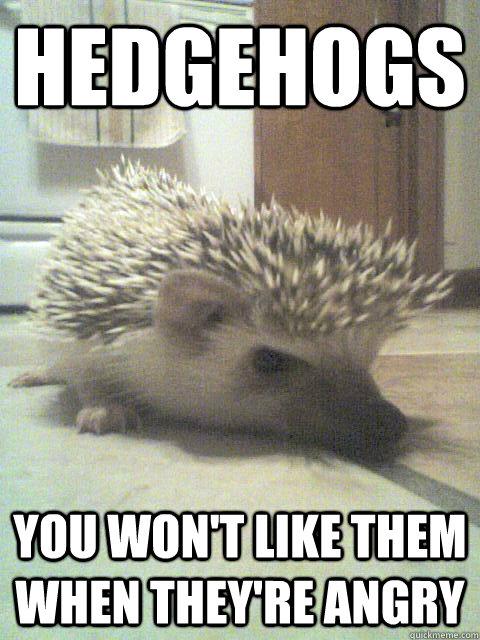 e9227c03e Hedgehogs You won't like them when they're angry - Angry Hedgehog ...