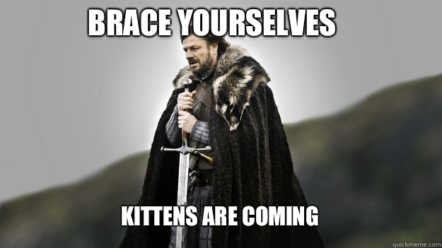 Brace yourselves Kittens are coming - Brace yourselves Kittens are coming  Ned stark winter is coming