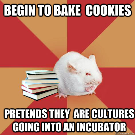 Begin to bake  cookies Pretends they  are cultures going into an incubator - Begin to bake  cookies Pretends they  are cultures going into an incubator  Science Major Mouse