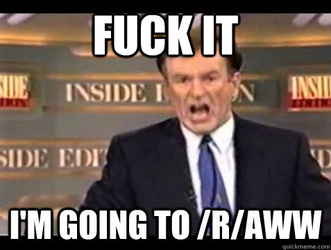 Fuck it I'm going to /r/aww - Fuck it I'm going to /r/aww  Bill OReilly Fuck It