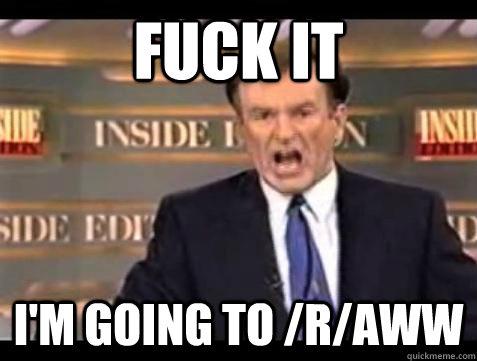 Fuck it I'm going to /r/aww - Fuck it I'm going to /r/aww  Bill OReilly Fuck It