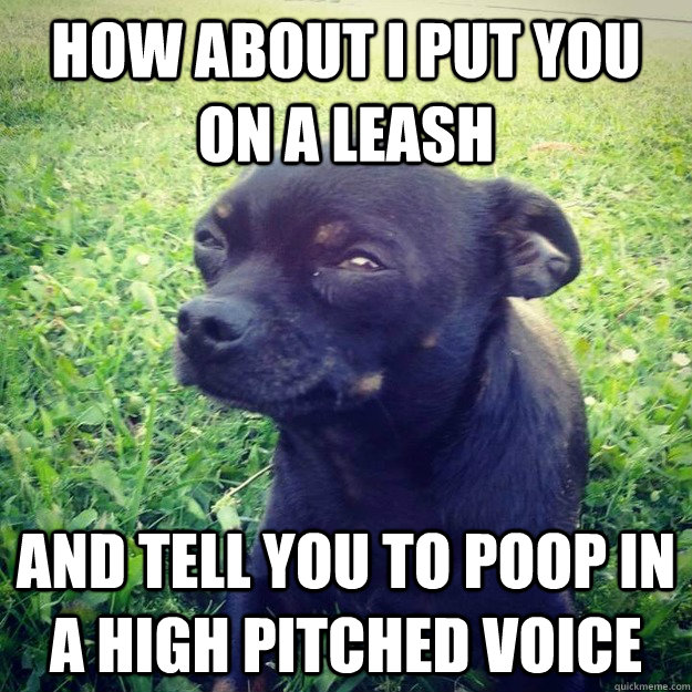 How about i put you on a leash and tell you to poop in a high pitched voice - How about i put you on a leash and tell you to poop in a high pitched voice  Skeptical Dog