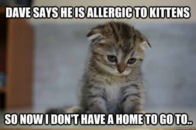 Dave says he is allergic to kittens So now i don't have a home to go to..  Sad Kitten