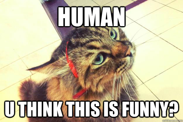 HUMAN U THINK THIS IS FUNNY?