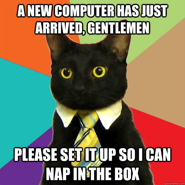 A new computer has just arrived, gentlemen Please set it up so I can nap in the box  Business Cat