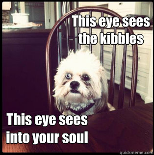 This eye sees  the kibbles This eye sees  into your soul