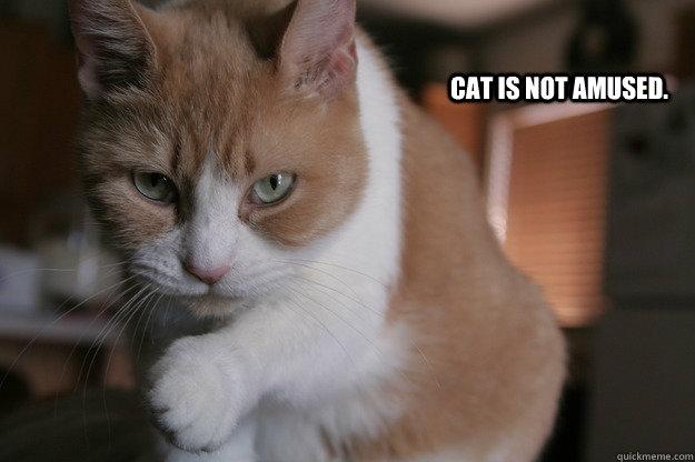 Cat is not amused.
