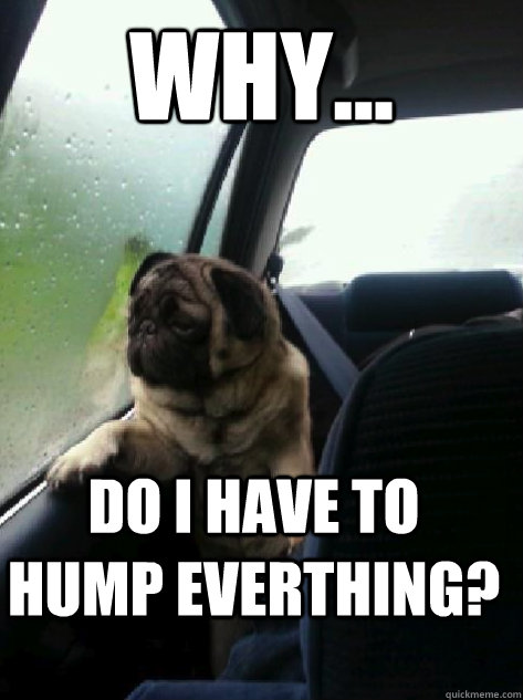 WHY... Do I have to hump everthing? - WHY... Do I have to hump everthing?  Introspective Pug