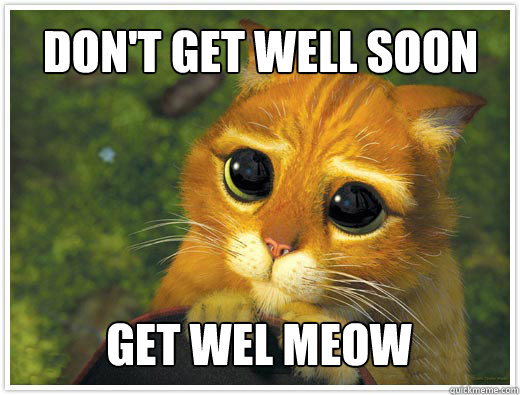 Don't get well soon get wel meow - Don't get well soon get wel meow  Shrek Cat