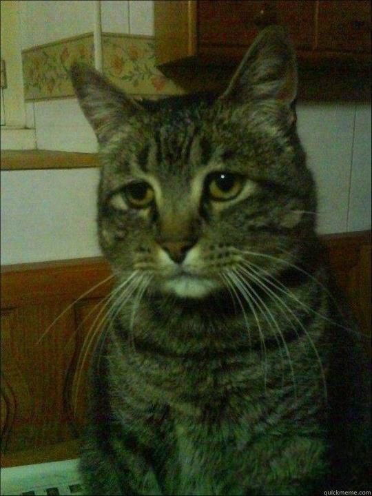 -    Depressed cat