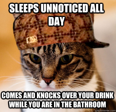 Sleeps unnoticed all day comes and knocks over your drink while you are in the bathroom - Sleeps unnoticed all day comes and knocks over your drink while you are in the bathroom  Scumbag Cat