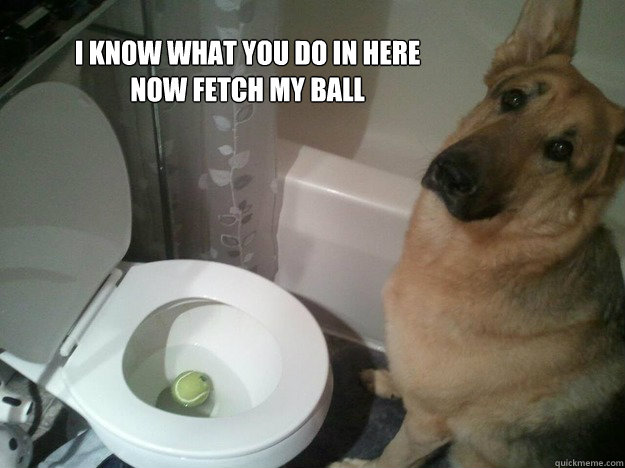 I know what you do in here Now fetch my ball - I know what you do in here Now fetch my ball  Misc