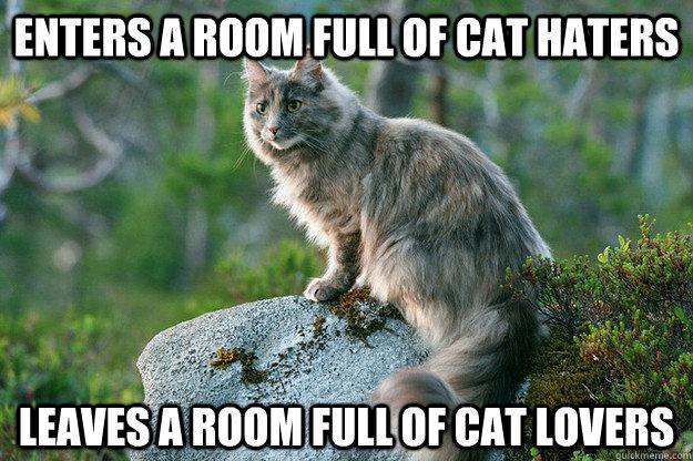 442dd365750b19c54ea3ecd2ef8084d0cda4668204c94ac4cd4c818b40c8e836 enters a room full of cat haters leaves a room full of cat lovers,Cat Lover Meme