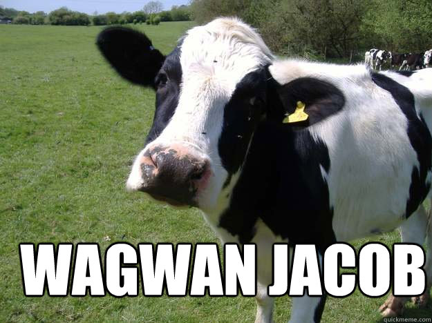 wagwan jacob   Whatcowwhat