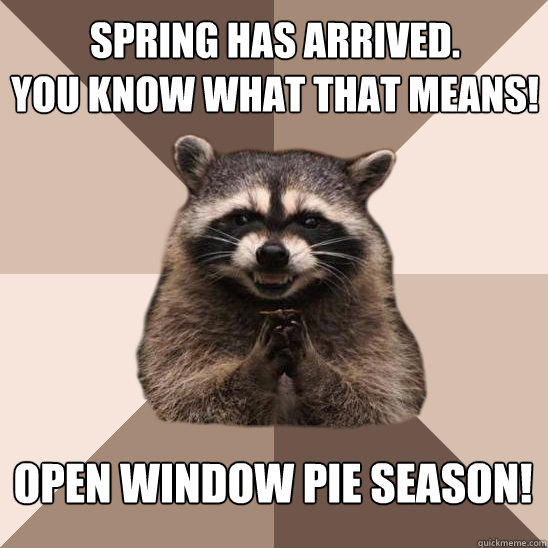Spring has arrived. You know what that means! Open Window Pie Season! - Spring has arrived. You know what that means! Open Window Pie Season!  Evil Plotting Raccoon