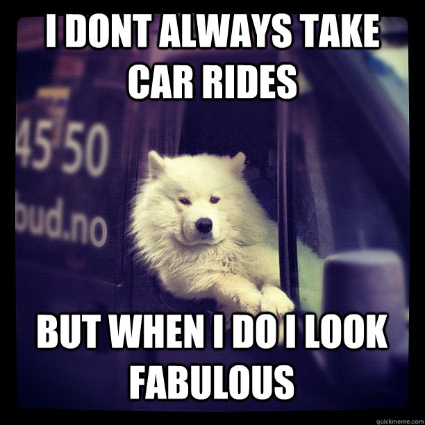 i dont always take car rides but when i do i look fabulous   Most interesting dog in the world