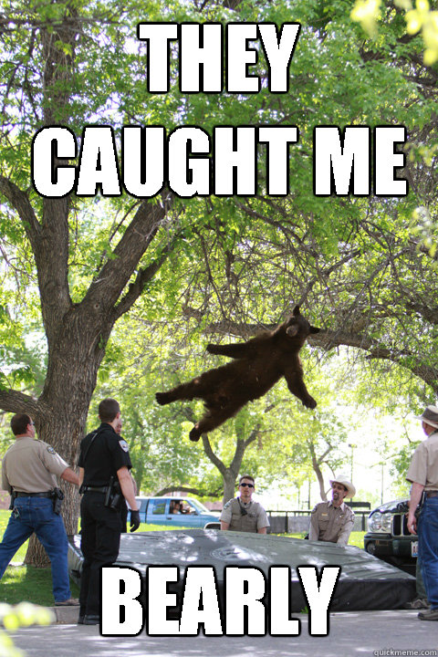 They caught me Bearly